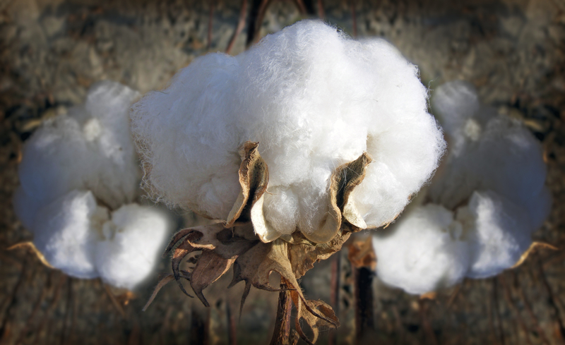 What is the difference between organic cotton and cotton